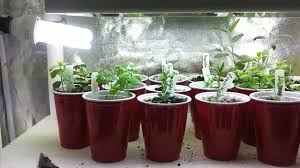 indoor kitchen garden. Inspirational Cheap Growing Pot Or Container Ideas For DIY Close LED Kitchen Garden Indoor Herb With Compact Fluorescent Lamp