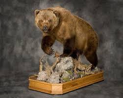 bear taxidermist bear taxidermy black bear mount pennsylvania bear taxidermy specialists grizzly bear mount brown bear mount bear skin rugs custom bear