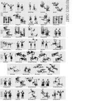 Weight Reference Chart Weight Training Charts Pdf Weight Training Flexibility