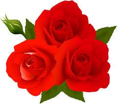 rose flower images free
