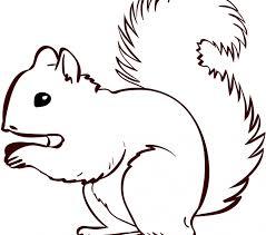Small Picture Squirrel Coloring Page Best Coloring Pages adresebitkiselcom