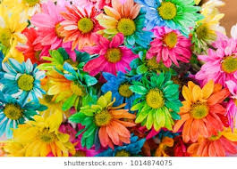 colored pictures of flowers.  Pictures Chrysanthemum Rainbow Flower Bouquets Of Blossom Rainbow  Flowers Selective Focus Inside Colored Pictures Of Flowers