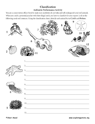 Coral Classification Chart Classification Authentic Performance Activity