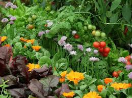 a companion planting vegetable garden