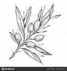 оливковая ветвь татуировка дизайн векторные иллюстрации
