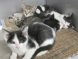 animal shelter kittens. Perfect Shelter We  For Animal Shelter Kittens O