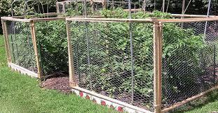 Diy tomato cage Tomato Plants Shtf Preparedness Diy Pvc Tomato Cages