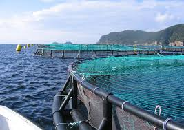 essay overfishing solutions jour  aquaculture fish farming is a popular solution to overfishing but it is expensive