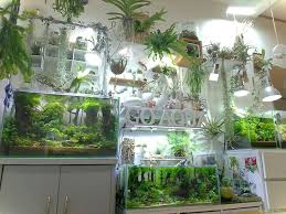 Aquarium Interior Design Ideas 50 Aquascaping Ideas For Inspirations Room With Plants