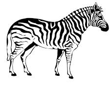 Kleurplaat Dieren Zebra Kleurplaat Zebra