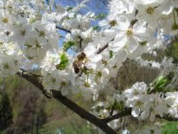 chaty a chalupy k pronajmutí jaro 2013