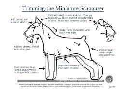 Andis Grooming Chart Pet Grooming Tips