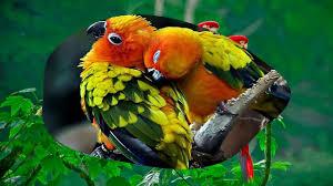 beautiful love birds hd1080p