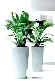 white plant pots indoor pot plants indoor plants plants pots for indoor plants big indoor pot