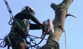 Taiere copaci defrisari toaletare curățare terenuri poze pe watap Bucuresti Sectorul 3 • OLX.ro