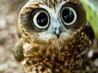 400+ <b>Cute owls</b> ideas in 2020 | beautiful owl, pet birds, <b>cute owl</b>