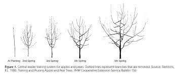 How To Prune Peach TreesCan You Prune Fruit Trees In The Summer