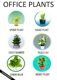 plants for windowless office. 7 best low-maintenance plants for the office windowless