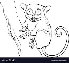 tarsier cartoon coloring book vector image