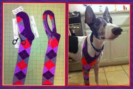 stop dog from licking wound.  Dog Cut A Sock To Protect Dog Injury Leg Stops Licking Intended Stop Dog From Licking Wound E