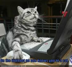 on the internet nobody knows you re a cat. Plain The On The Internet No One Knows Youu0027re A Cat  By CarlaLynneHall With The Internet Nobody Knows You Re A Cat