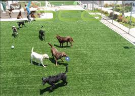 artificial grass for pets. Durable Custom Outdoor Artificial Grass For Pets , Dog Friendly Turf