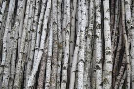 Birch Poles, Bark, Sticks & Logs