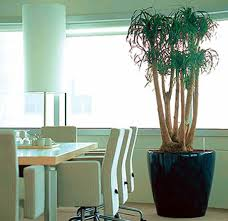 interior landscaping office. Interior Landscaping From Ambius For Offices Office