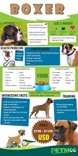 Boxer Puppy Growth Chart Boxer Puppies Dog Breed Information Temperament And Price