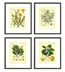 herb wall art pleasurable design ideas herb wall art kitchen herbs antique botanical print set of herb wall art