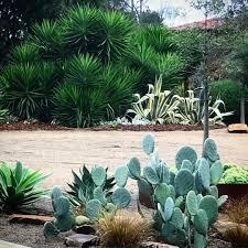Palm Springs Garden Design Architectural Forms Colinhyettdesign Droughttolerant