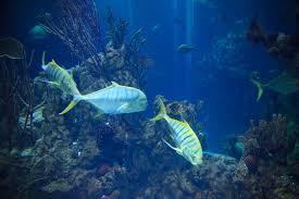 Acquario capriate underwaterfantasy progettazione e