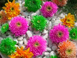 flower garden designs. Splendent Home Flower Garden Design With Designs Betsy Manning In Bed