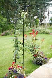 climbing plants garden trellis