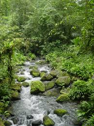 for i will consider small streams a poetic essay international  a small stream in la selva biological reserve