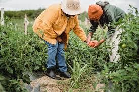 vegetable gardening mauricioes