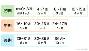 妊娠 周期 計算