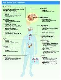 Image Result For Endocrine System Hormones Chart Endocrine