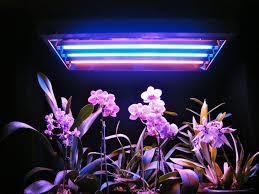 fascinating fluorescent light and plants 83 cfl light bulbs plants grow light bulbs