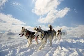 Moscow - <b>Dog</b> sledding Tour in Russian Nature   Tsar Visit   Visit ...