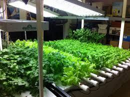 Hydroponics Herb Garden Kitchen Hydroponic Gardening Supplies Hydroponic Gardening Supplies