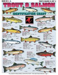 Atlantic Salmon Size Chart How To Identify Freshwater Species Shad Perch Walleye