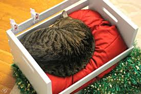 diy wood crate cat bed this cat bed is perfect year round and any kitty would be spoiled to have it 7 make your own cat scratch pad a scratching pad