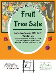 Citrus Plant Sales Temporarily Banned In Harris County  Houston Fruit Tree Sale Houston