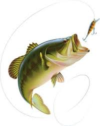 largemouth bass jumping. Beautiful Largemouth Largemouth Bass Is Catching A Bite And Jumping In Water Spray Layered  Vector Illustration Stock Vector With Bass Jumping