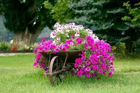 garden decorations. A Wheelbarrow Planter. Garden Decorations