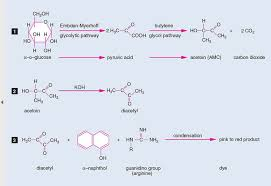 Enterobacteriaceae Biochemical Reactions Chart Voges Proskauer Vp Test Principle Procedure And Results