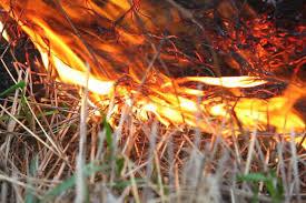 Картинки по запросу пожежі в екосистемах
