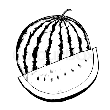 hand drawing of watermelon on white background black and white simple line vector ilration for coloring book line drawn vector stock vector