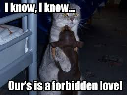 Forbidden Love Quotes Delectable Forbidden Love Quotes Sayings Forbidden Love Picture Quotes